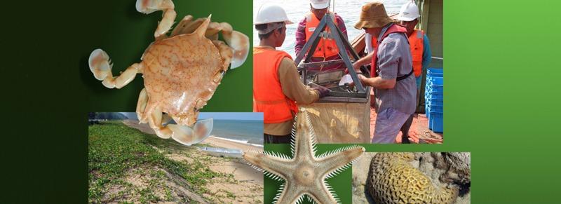 Marine survey fieldwork being undertaken in Terengganu, Malaysia, for the operational environmental monitoring program.